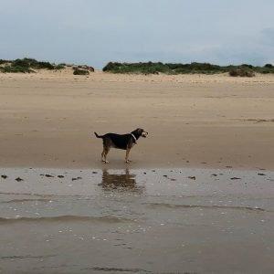 Molly on the Brancaster beach